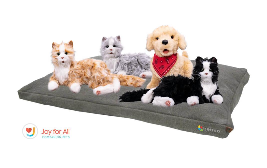 THE CAT / komCAT